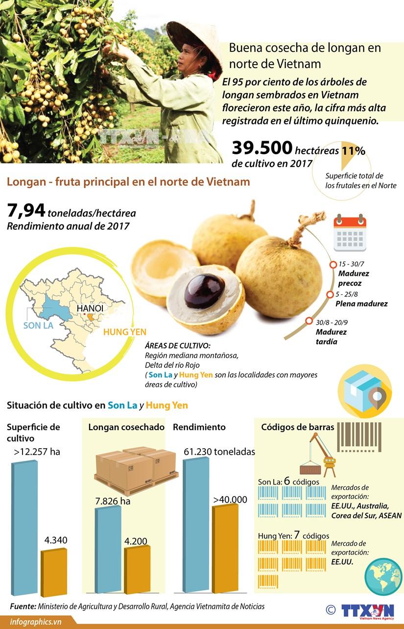 [Infografia] Buena cosecha de longan en el norte de Vietnam hinh anh 1