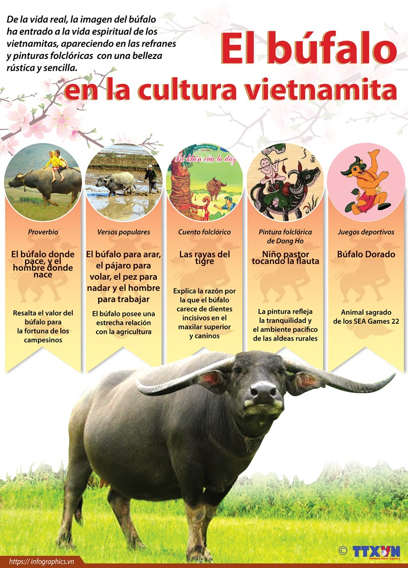 El bufalo en la cultura vietnamita hinh anh 1