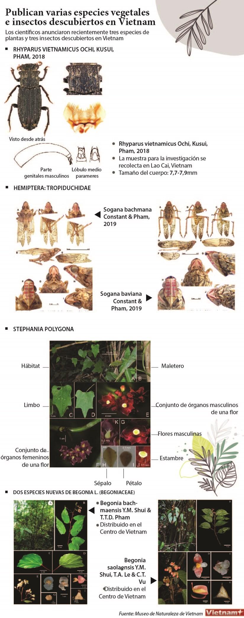 [Infografia] Publican varias especies vegetales e insectos descubiertos en Vietnam hinh anh 1